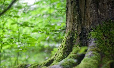 Mengatasi Kerusakan pada Hutan