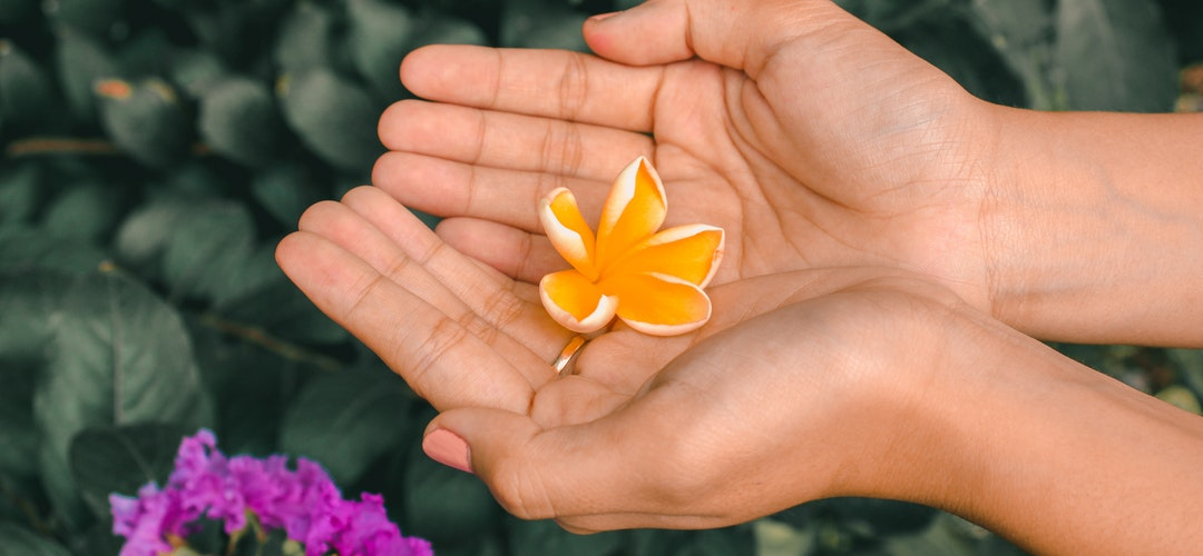 Macam-Macam Kegunaan Bunga Papan