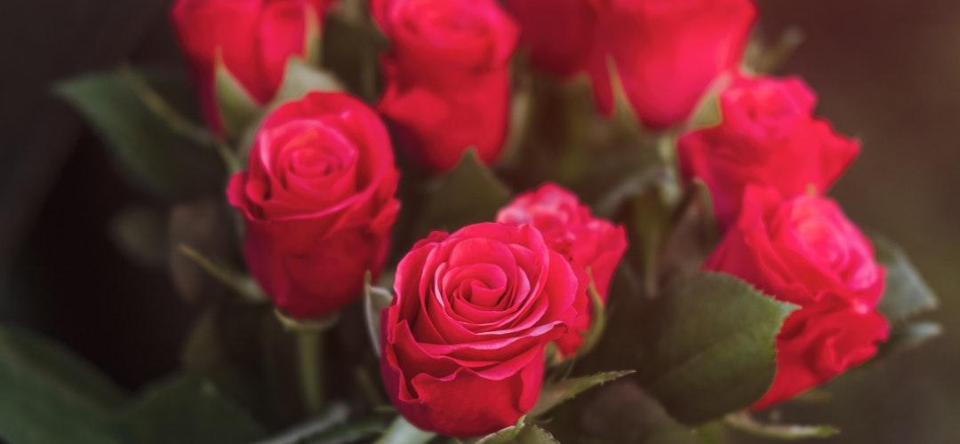 Cara Menanam Bunga Mawar
