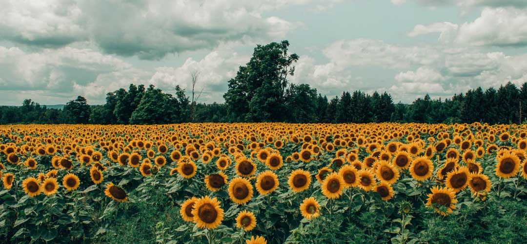 Tips Memilih Buket Bunga Wisuda