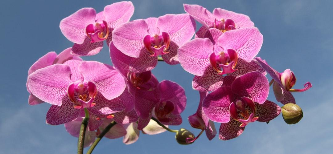 Manfaat Kesehatan Bunga Calendula